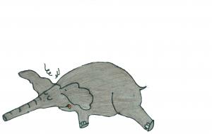 dead elephant edited